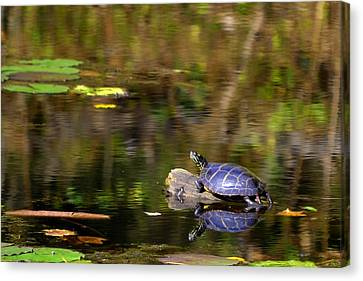 Slider In The Sun Canvas Print by Mary Zeman