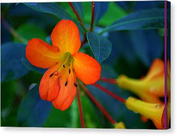 Canvas Print featuring the photograph Small Orange Flower by Tikvah's Hope