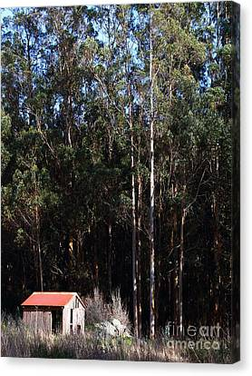 Small Shack Near The Town Of Bodega . 7d12422 Canvas Print by Wingsdomain Art and Photography