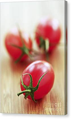 Small Tomatoes Canvas Print by Elena Elisseeva