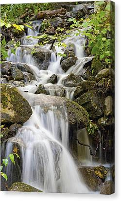 Small Waterfalls And Brook West Bolton Canvas Print by David Chapman