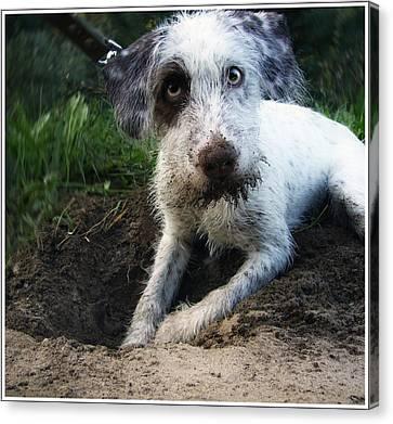 Small White Dog Canvas Print