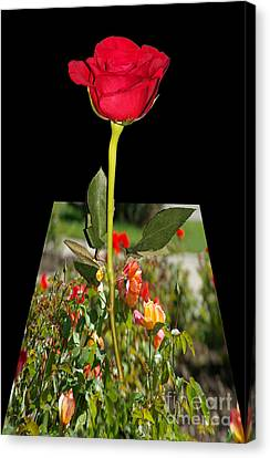 Smell Me Canvas Print by Mariola Bitner