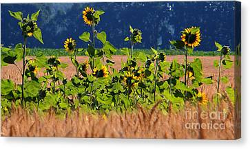 Smiles For You Canvas Print