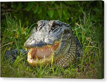 Beauty Mark Canvas Print - Smiling Alligator by Rich Leighton