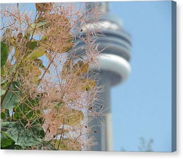Smoke Bush With Cn Tower Canvas Print by Alfred Ng