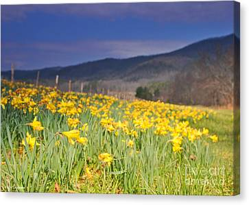 Smoky Mountain National Park Daffodil Spring Canvas Print