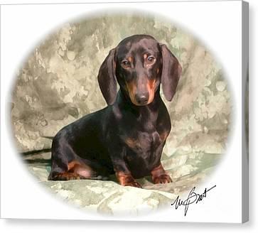 Smooth Dachshund Doxie Pup Canvas Print by Maxine Bochnia