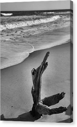 Snag And Surf Canvas Print by Steven Ainsworth