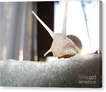 Snails 1 Canvas Print by AmaS Art