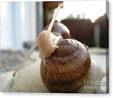 Snails 10 Canvas Print by AmaS Art