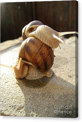 Canvas Print featuring the photograph Snails 13 by AmaS Art