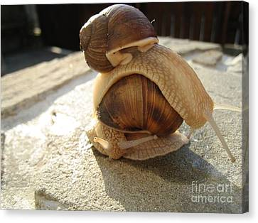 Canvas Print featuring the photograph Snails 14 by AmaS Art