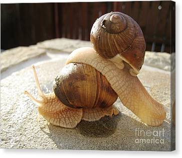 Canvas Print featuring the photograph Snails 17 by AmaS Art