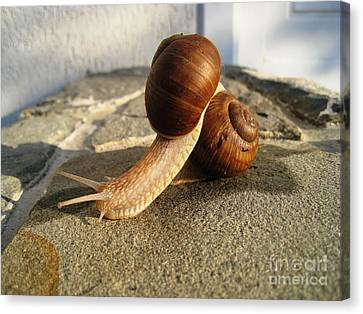 Canvas Print featuring the photograph Snails 18 by AmaS Art