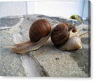 Canvas Print featuring the photograph Snails 19 by AmaS Art
