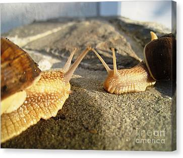 Canvas Print featuring the photograph Snails 2 by AmaS Art