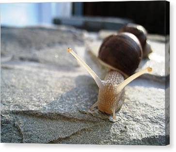 Canvas Print featuring the photograph Snails 20 by AmaS Art