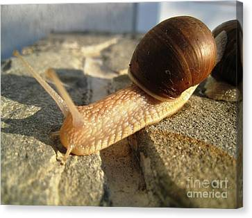 Canvas Print featuring the photograph Snails 21 by AmaS Art