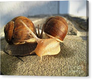 Canvas Print featuring the photograph Snails 22 by AmaS Art