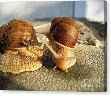 Canvas Print featuring the photograph Snails 23 by AmaS Art