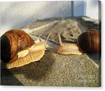 Canvas Print featuring the photograph Snails 3 by AmaS Art