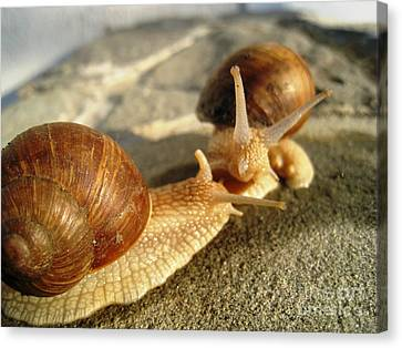 Canvas Print featuring the photograph Snails 4 by AmaS Art