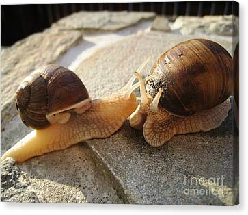 Canvas Print featuring the photograph Snails 5 by AmaS Art