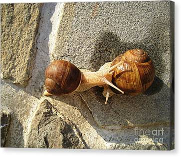 Canvas Print featuring the photograph Snails 8 by AmaS Art