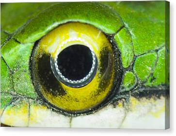 Canvas Print featuring the photograph Snake Eye by John Burns