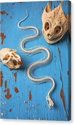 Snake Skeleton And Animal Skulls Canvas Print by Garry Gay