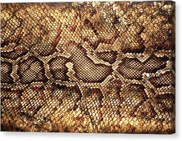 Snake Skin Canvas Print by Abner Merchan