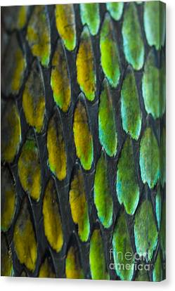 Canvas Print featuring the photograph Snake Skin by John Burns