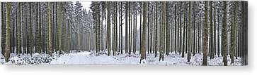 Snow-covered Forest In Winter Canvas Print by Hans-Peter Merten
