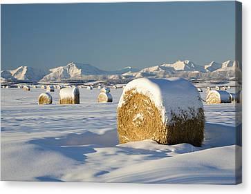 Snow-covered Hay Bales Okotoks Canvas Print by Michael Interisano