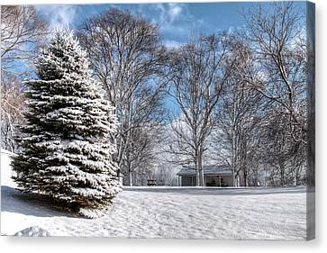 Snow Covered Pine Canvas Print by Richard Gregurich