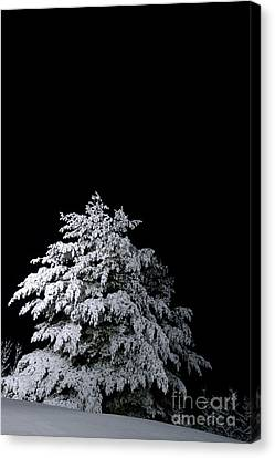 Snow-covered Tree Canvas Print