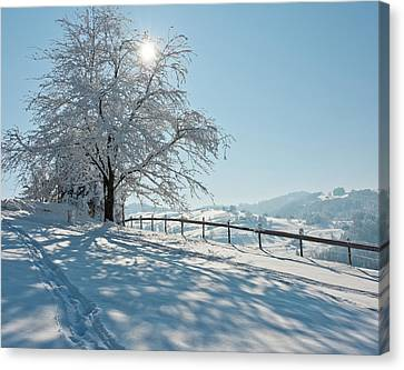 Snow Covered Tree With Sun Shining Through It Canvas Print by © Peter Boehi