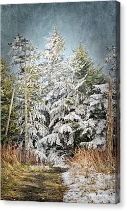 Snow Covered Trees Canvas Print by Cheryl Davis