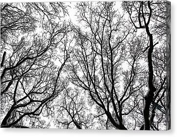 Snow Covered Trees Canvas Print by Richard Newstead