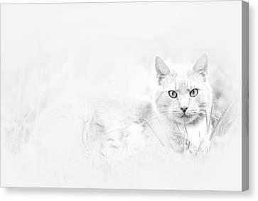 Snow Eyes Canvas Print