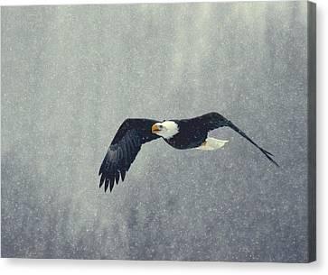Snow Flight Canvas Print by Myrna Bradshaw