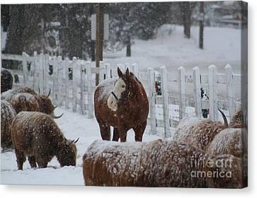 Snow Horse Canvas Print by Linda Jackson