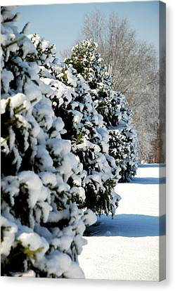 Canvas Print featuring the photograph Snow In The Trees by Mark Dodd