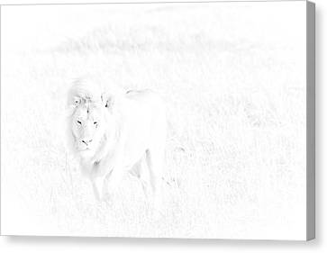 Snow Lion Canvas Print by Darcy Michaelchuk