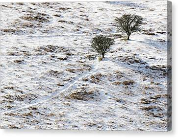 Snow On Moorland Canvas Print by Adrian Bicker