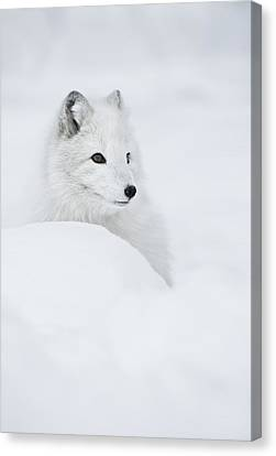 Snow Queen Canvas Print by Andy Astbury