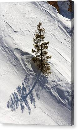 Snow Shadow Canvas Print