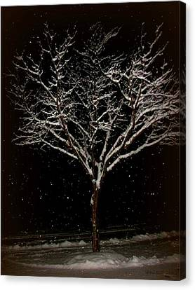 Snow Shower In The Night Canvas Print