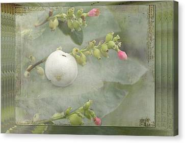 Snowberry Tales Canvas Print by Steppeland -